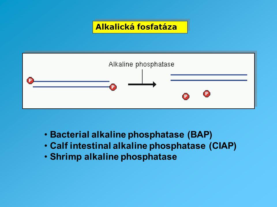 Alkalická fosfatáza Bacterial alkaline phosphatase (BAP) Calf intestinal alkaline phosphatase (CIAP) Shrimp alkaline phosphatase