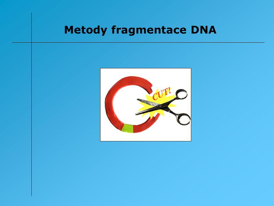 Z hlediska metod molekulární biologie jsou významné dva typy fragmentace DNA – sekvenčně specifická a nespecifická.
