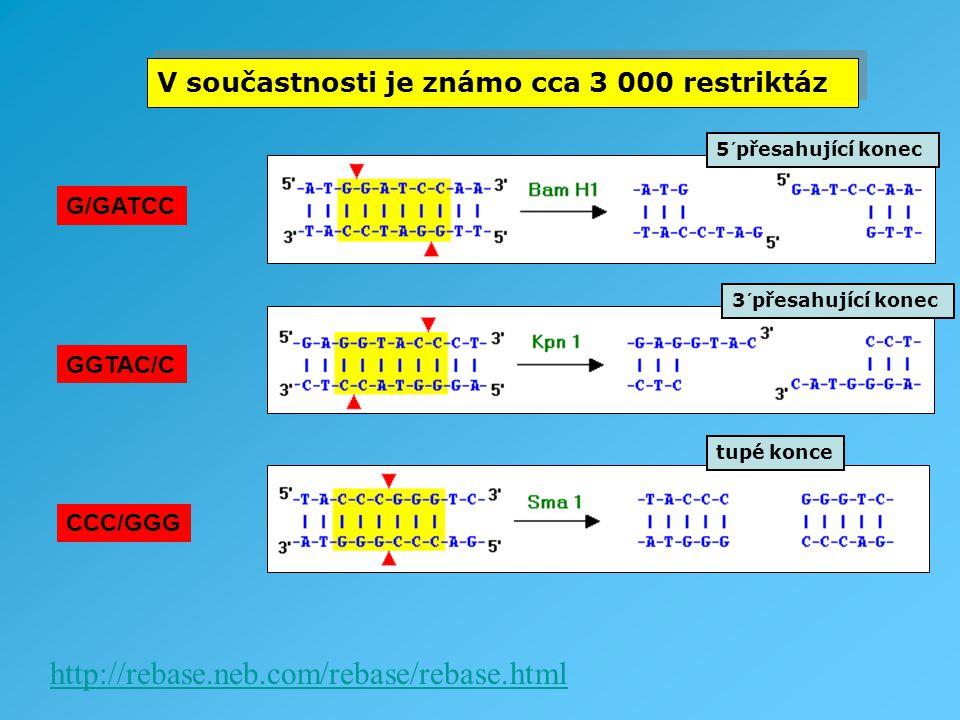 V součastnosti je známo cca 3 000 restriktáz http://rebase.neb.com/rebase/rebase.html G/GATCC GGTAC/C CCC/GGG 5´přesahující konec 3´přesahující konec
