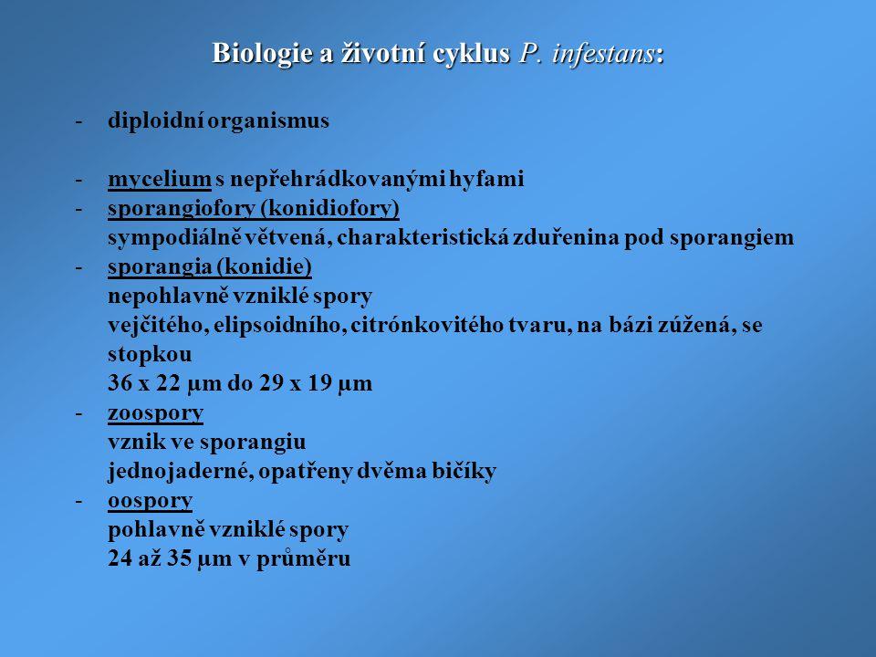 Biologie a životní cyklus P. infestans: -diploidní organismus -mycelium s nepřehrádkovanými hyfami -sporangiofory (konidiofory) sympodiálně větvená, c