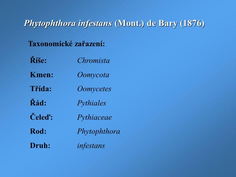 Phytophthora infestans (Mont.) de Bary (1876) Taxonomické zařazení: Říše:Chromista Kmen:Oomycota Třída:Oomycetes Řád:Pythiales Čeleď:Pythiaceae Rod:Ph