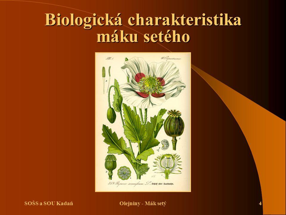 SOŠS a SOU KadaňOlejniny - Mák setý4 Biologická charakteristika máku setého