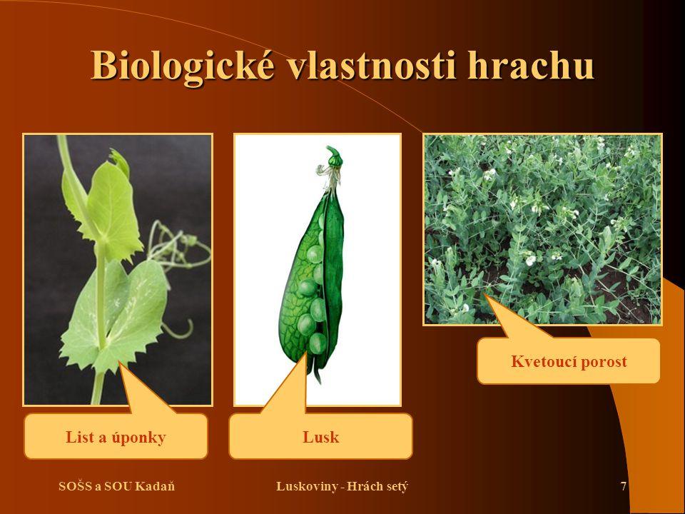 SOŠS a SOU KadaňLuskoviny - Hrách setý7 Biologické vlastnosti hrachu List a úponky Lusk Kvetoucí porost