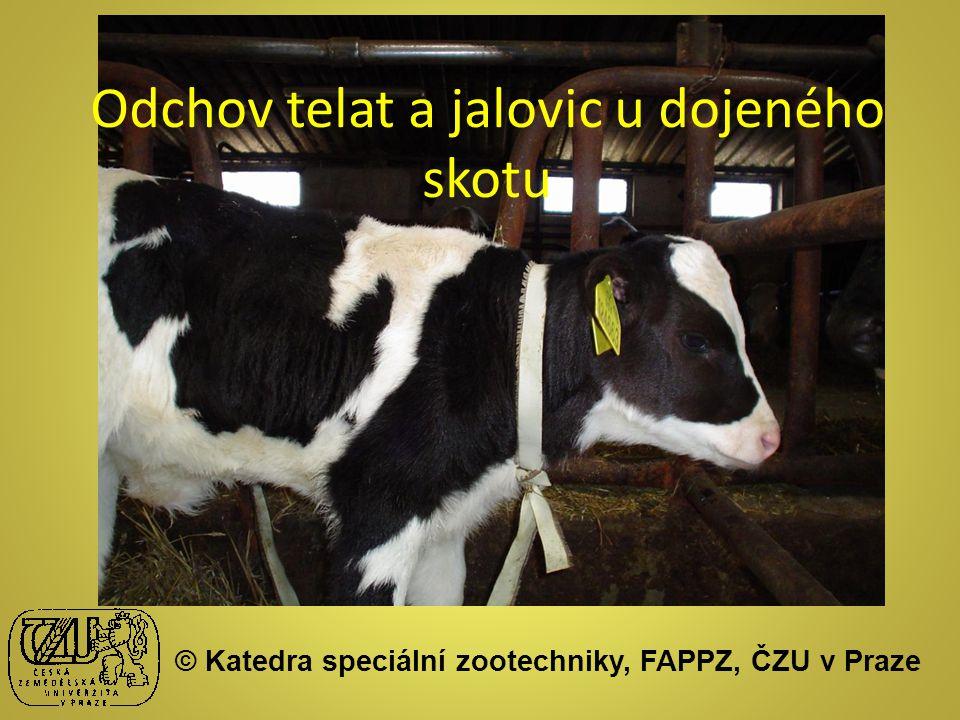Odchov telat a jalovic u dojeného skotu © Katedra speciální zootechniky, FAPPZ, ČZU v Praze