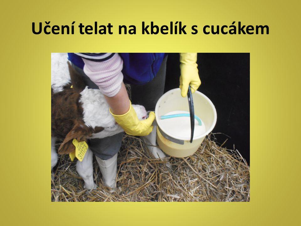 Učení telat na kbelík s cucákem