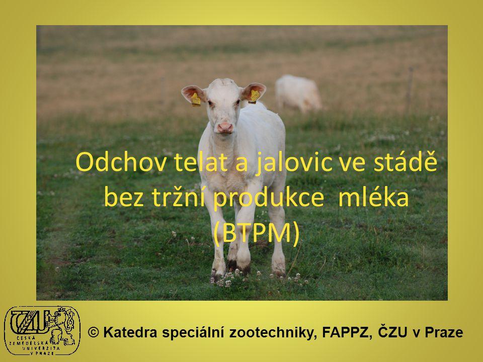 Odchov telat a jalovic ve stádě bez tržní produkce mléka (BTPM) © Katedra speciální zootechniky, FAPPZ, ČZU v Praze