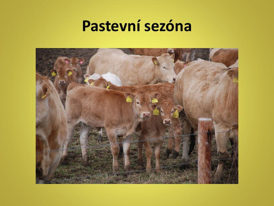 Pastevní sezóna