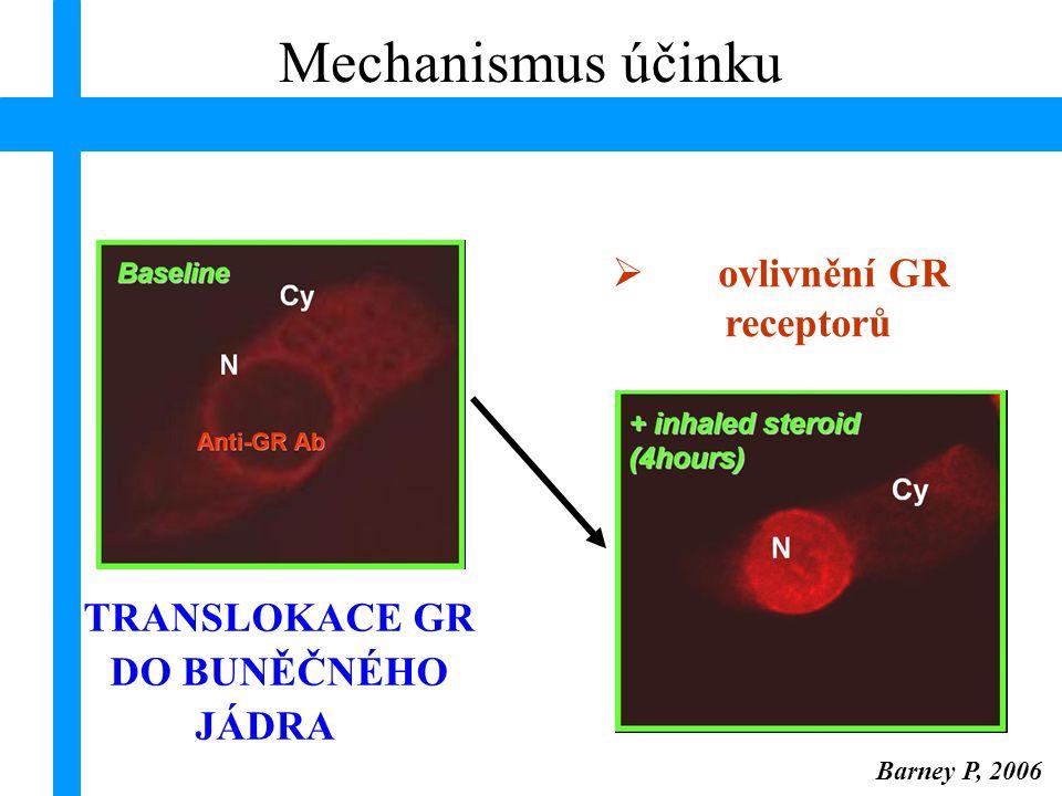 Barney P, 2006 HDACs – histon deacetylázy; MAPK – Mitogen-Activated Protein Kinase Mechanismus účinku