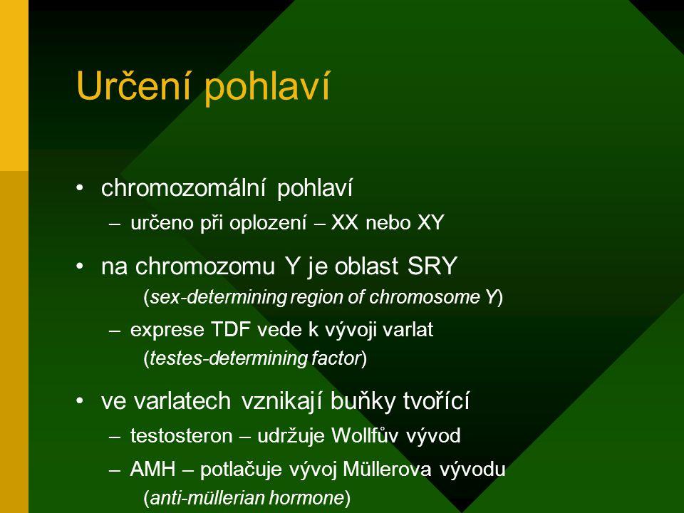 Určení pohlaví chromozomální pohlaví –určeno při oplození – XX nebo XY na chromozomu Y je oblast SRY (sex-determining region of chromosome Y) –exprese