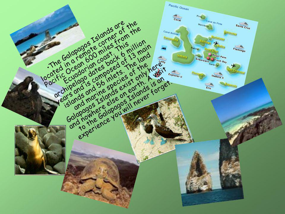 The Galapagos Islands are located in a remote corner of the Pacific Ocean 600 miles from the Ecuadorian coast.