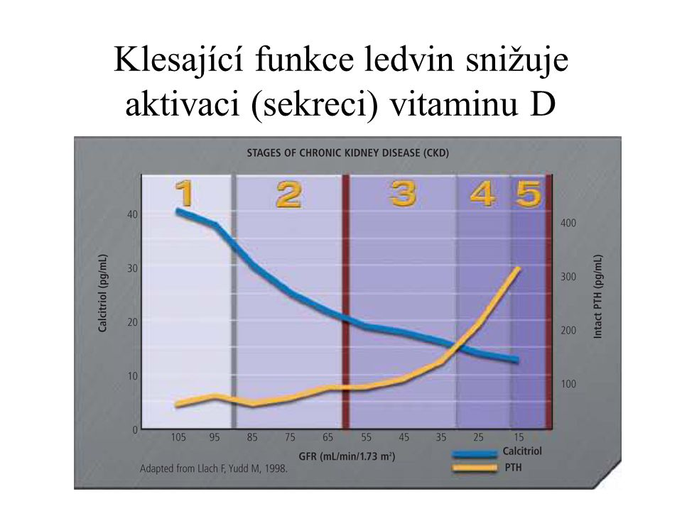 Klesající funkce ledvin snižuje aktivaci (sekreci) vitaminu D