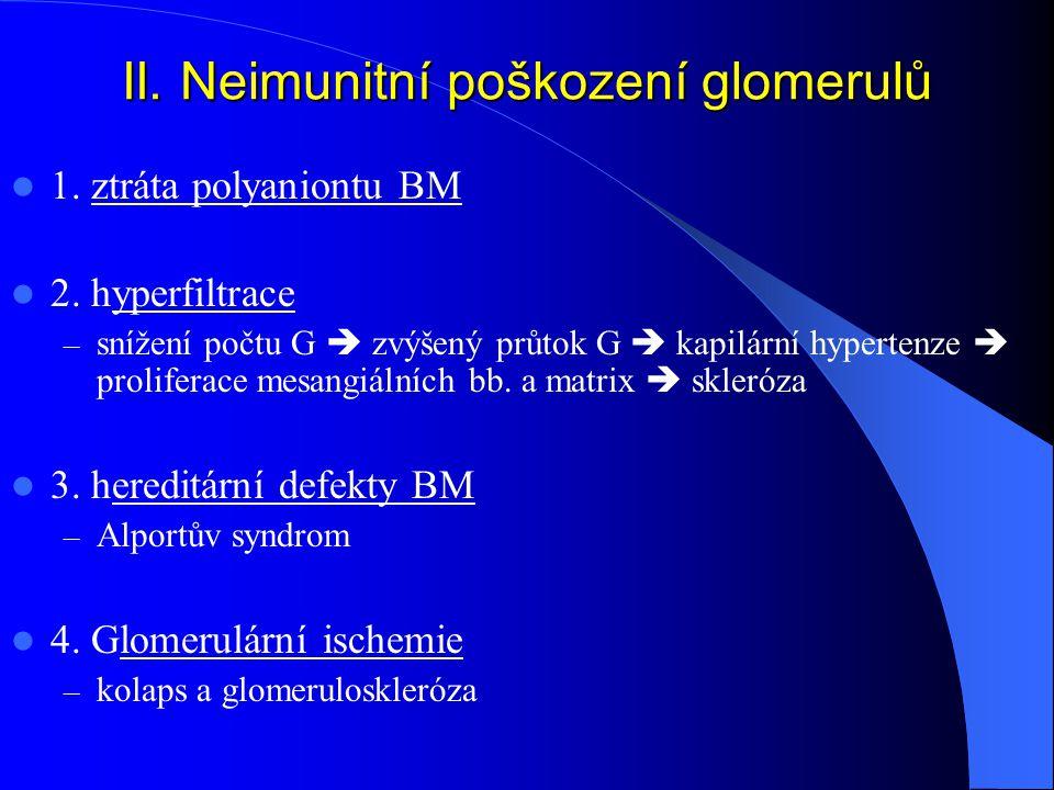 II.Neimunitní poškození glomerulů 1. ztráta polyaniontu BM 2.