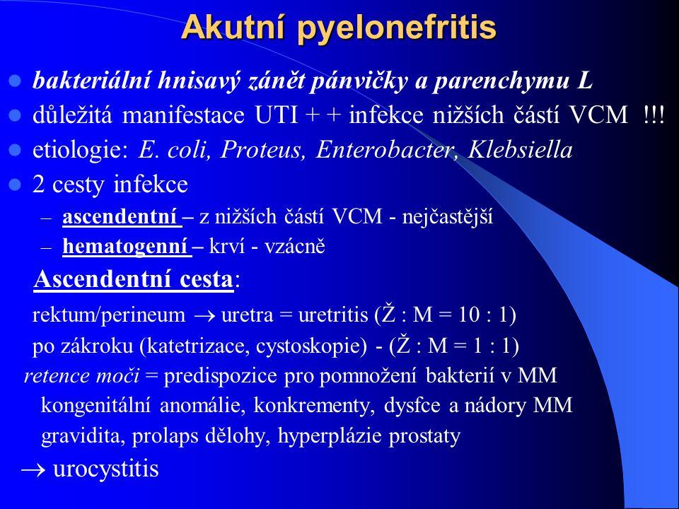 Akutní pyelonefritis bakteriální hnisavý zánět pánvičky a parenchymu L důležitá manifestace UTI + + infekce nižších částí VCM !!.