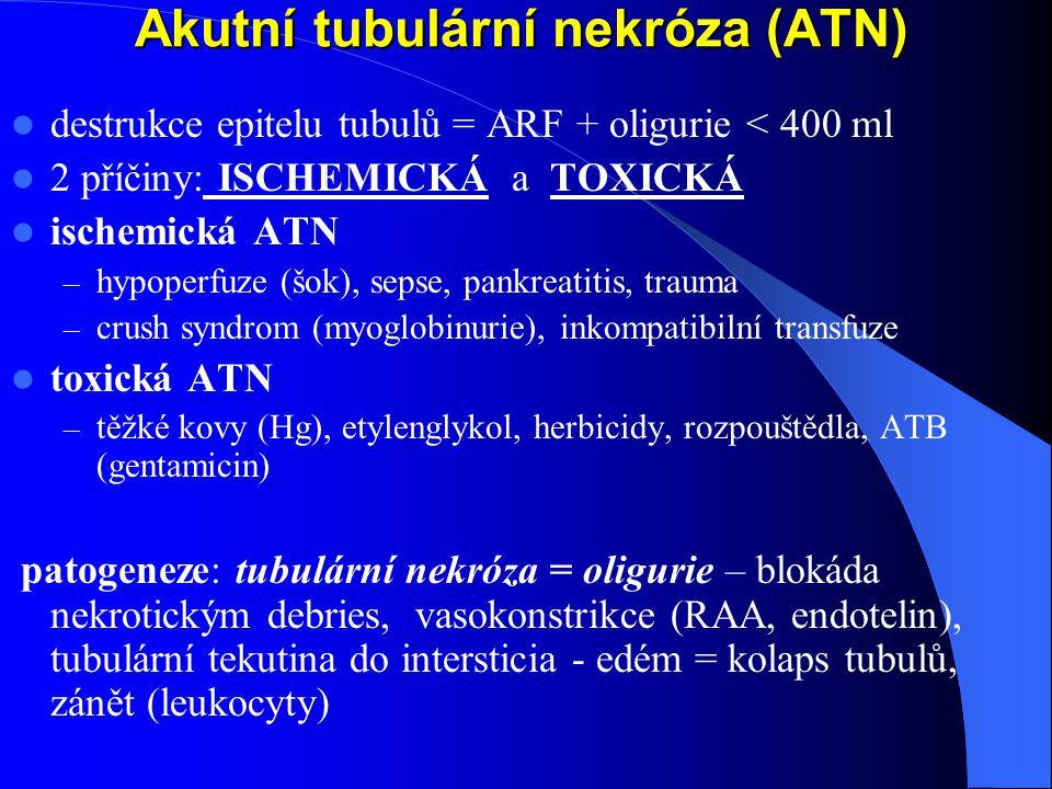 Akutní tubulární nekróza (ATN) destrukce epitelu tubulů = ARF + oligurie < 400 ml 2 příčiny: ISCHEMICKÁ a TOXICKÁ ischemická ATN – hypoperfuze (šok), sepse, pankreatitis, trauma – crush syndrom (myoglobinurie), inkompatibilní transfuze toxická ATN – těžké kovy (Hg), etylenglykol, herbicidy, rozpouštědla, ATB (gentamicin) patogeneze: tubulární nekróza = oligurie – blokáda nekrotickým debries, vasokonstrikce (RAA, endotelin), tubulární tekutina do intersticia - edém = kolaps tubulů, zánět (leukocyty)