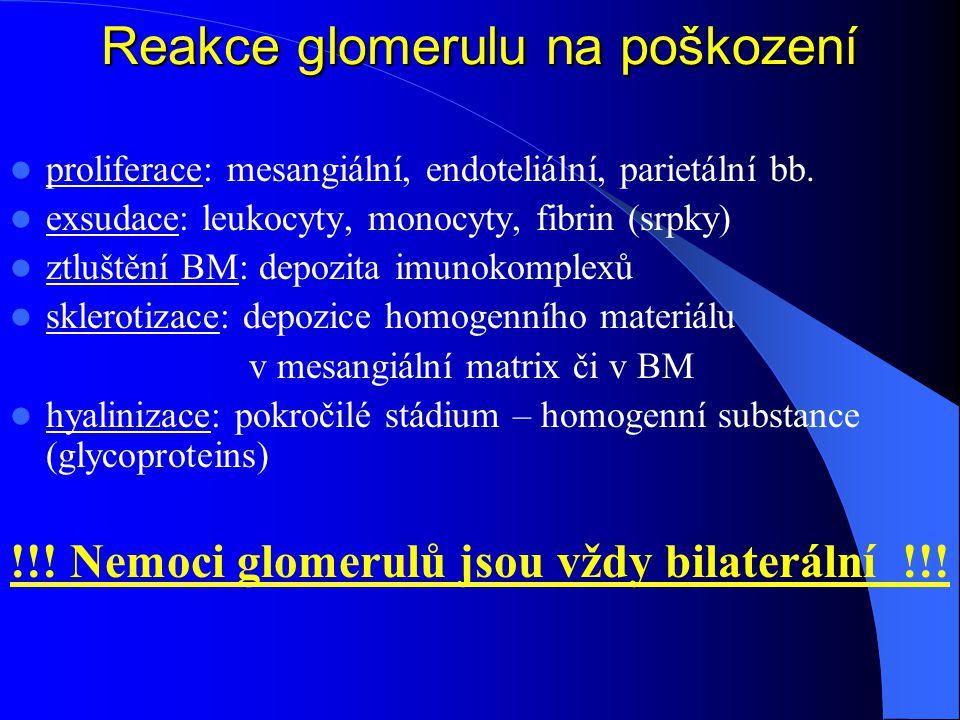 Reakce glomerulu na poškození proliferace: mesangiální, endoteliální, parietální bb.