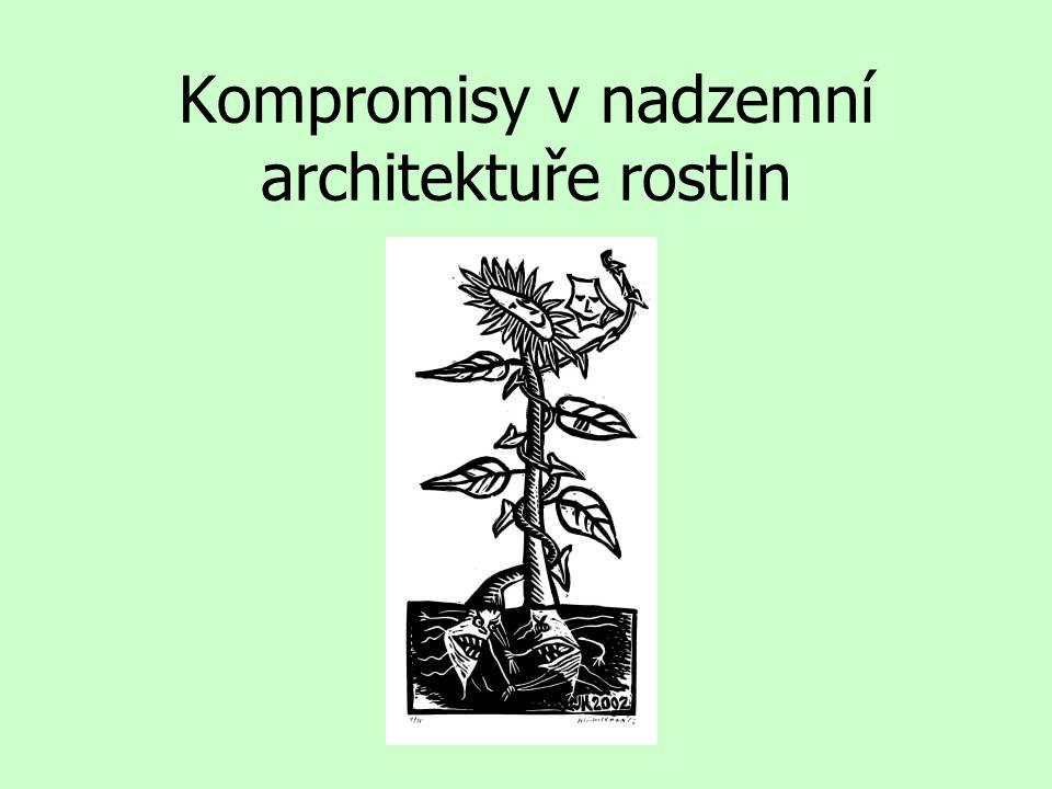 Kompromisy v nadzemní architektuře rostlin