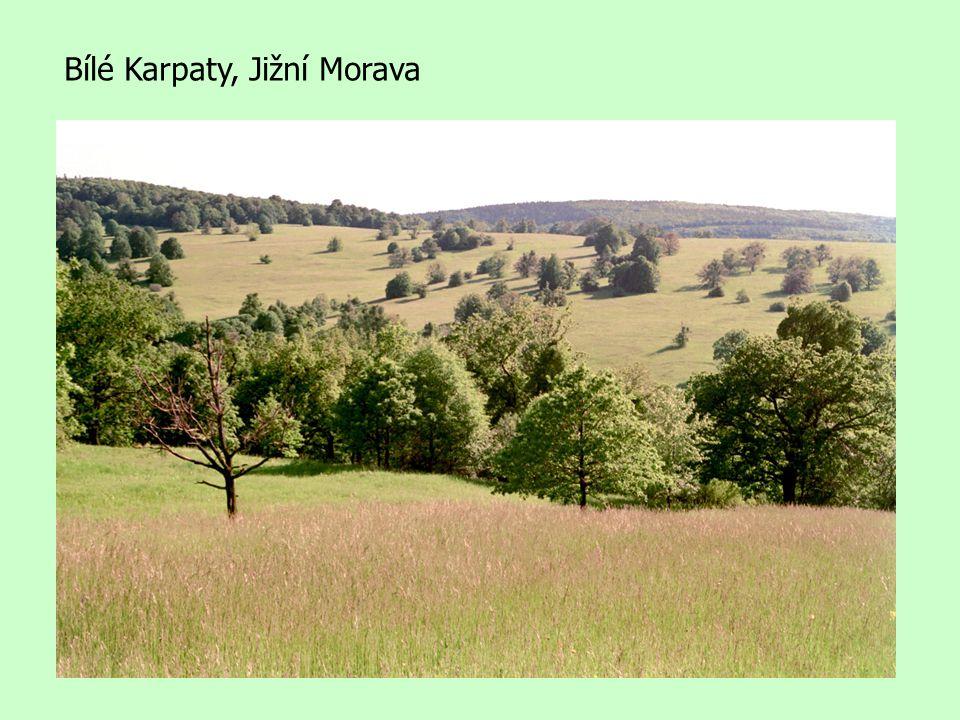 Bílé Karpaty, Jižní Morava