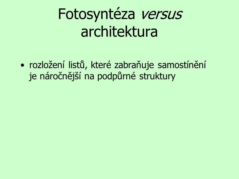 Fotosyntéza versus architektura rozložení listů, které zabraňuje samostínění je náročnější na podpůrné struktury