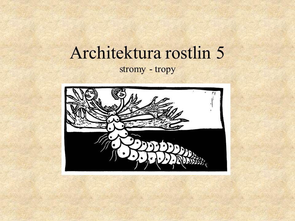 Troll's model A - Saraca thaipingensis (Leguminoseae) B - Phyllanthus myrtifolius (Euphorbiaceae) C - Chrysophyllum cainito (Sapotaceae) D - Anaxasgorea acuminata (Annonaceae) E - Psidium guineense (Myrtaceae)