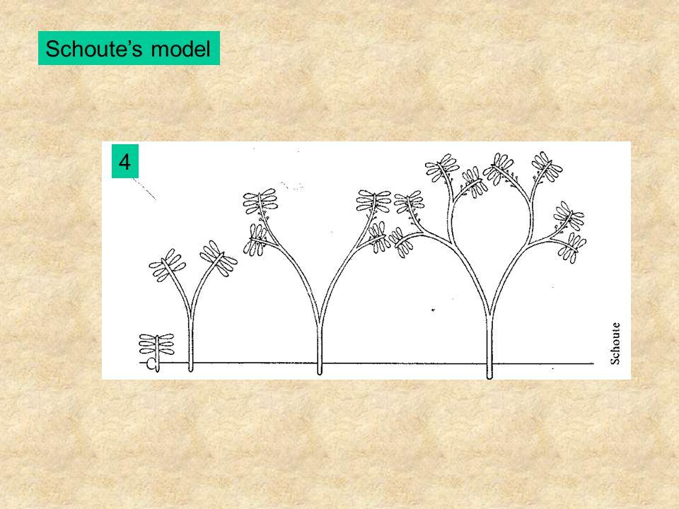 Schoute's model 4