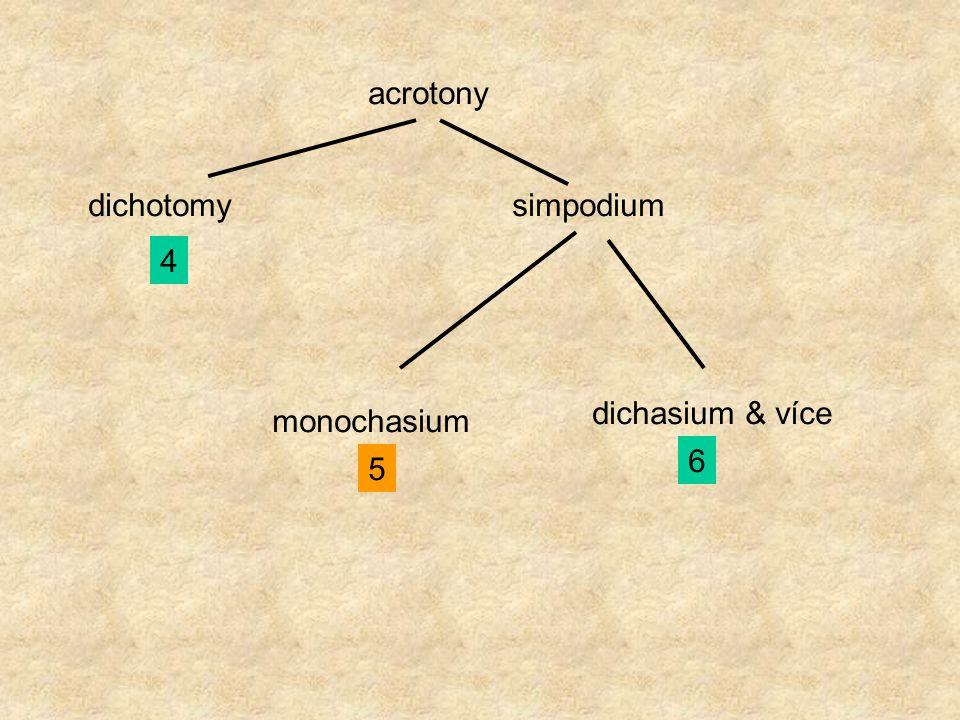 acrotony dichotomy 4 simpodium monochasium 5 dichasium & více 6