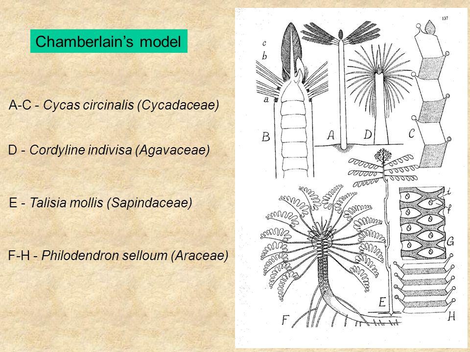 A-C - Cycas circinalis (Cycadaceae) D - Cordyline indivisa (Agavaceae) E - Talisia mollis (Sapindaceae) F-H - Philodendron selloum (Araceae)
