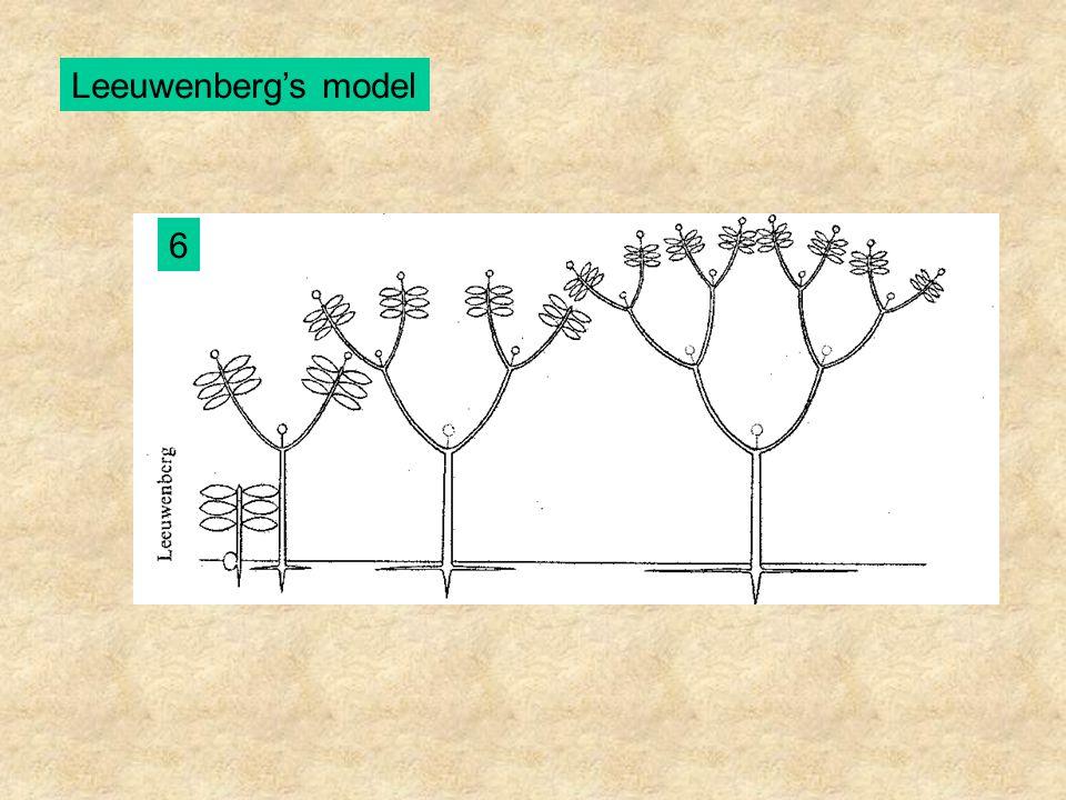 Leeuwenberg's model 6