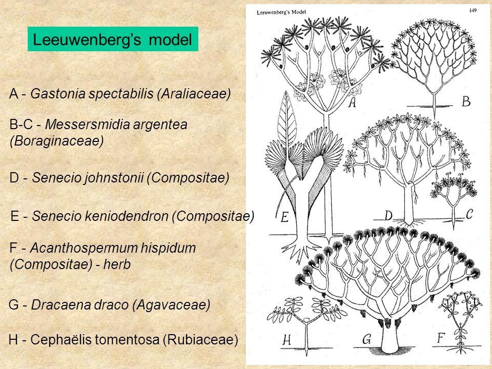 A - Gastonia spectabilis (Araliaceae) B-C - Messersmidia argentea (Boraginaceae) D - Senecio johnstonii (Compositae) E - Senecio keniodendron (Composi