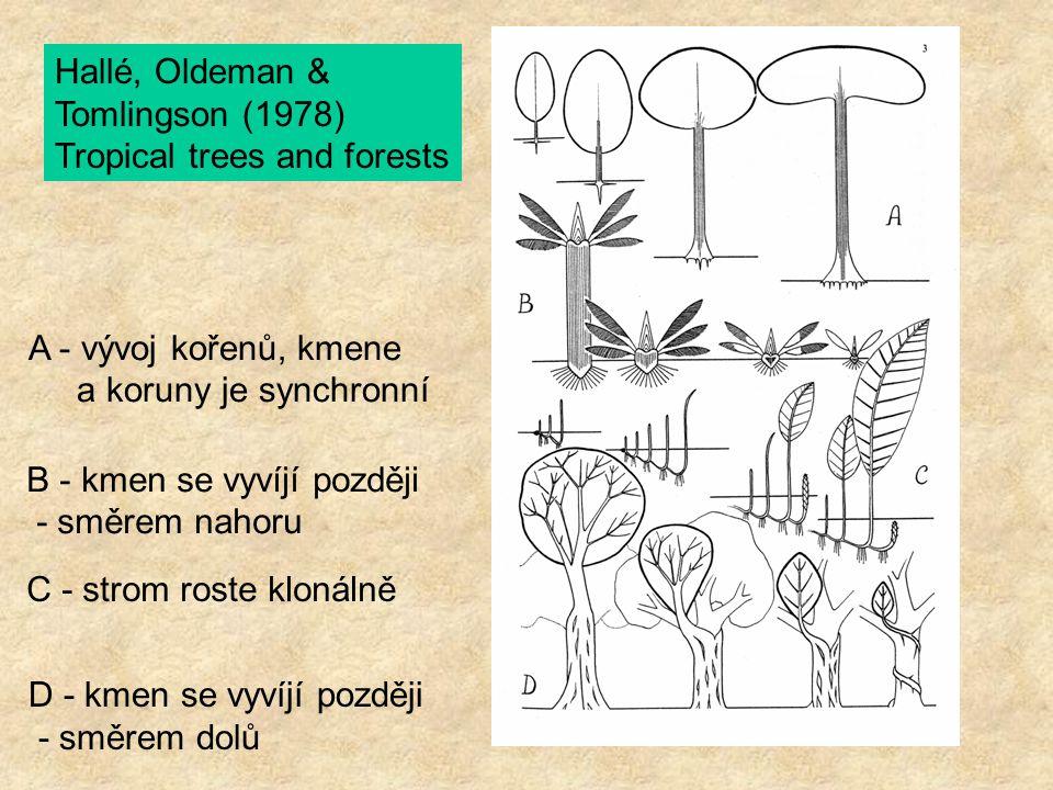 Architektura - momentální morfologické vyjádření genetické vlohy (blueprint) rostliny Architekturní modely - vrozený vývoj architektury rostliny v ontogenezi studovat pokud možno v podmínkách ideálních pro růst - v kultivaci