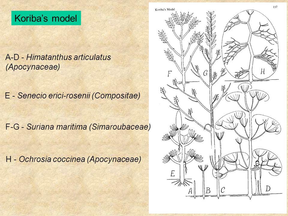 Koriba's model A-D - Himatanthus articulatus (Apocynaceae) E - Senecio erici-rosenii (Compositae) F-G - Suriana maritima (Simaroubaceae) H - Ochrosia