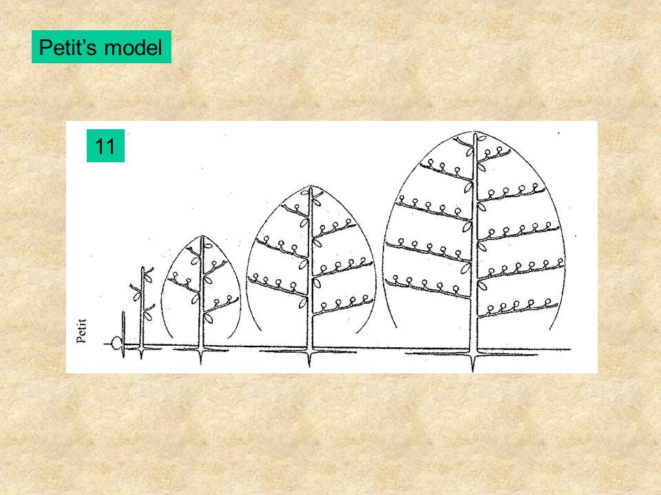 Petit's model 11