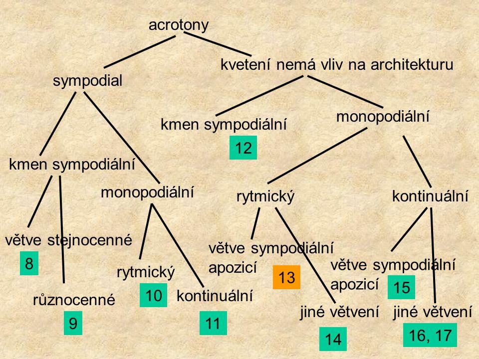acrotony sympodial kvetení nemá vliv na architekturu kmen sympodiální monopodiální větve stejnocenné různocenné 8 9 rytmický kontinuální10 11 kmen sym