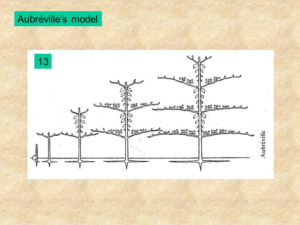 Aubréville's model 13