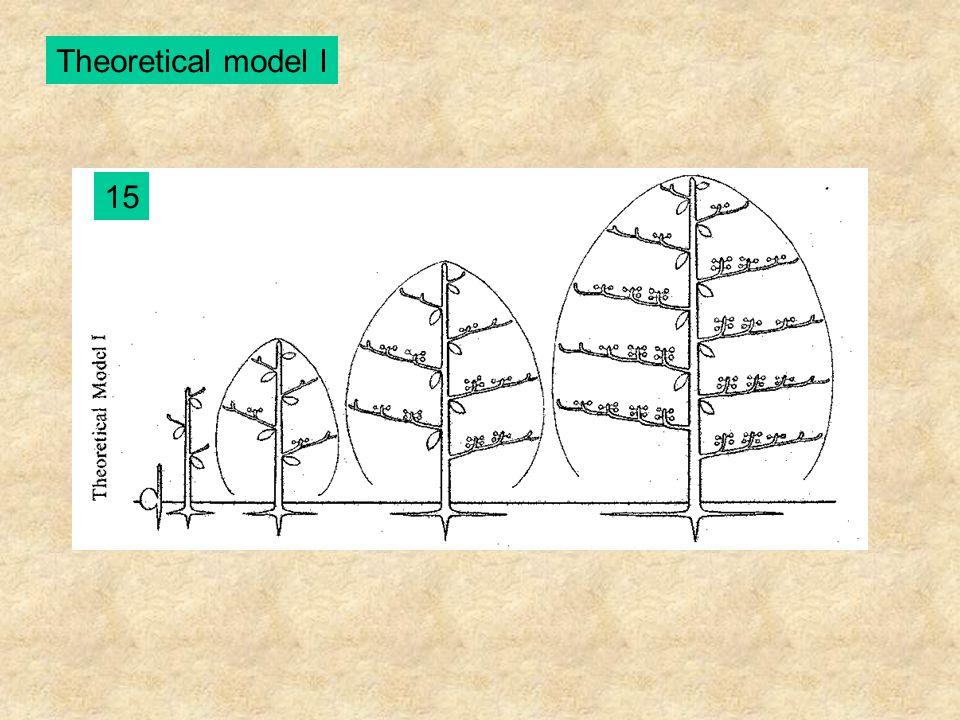 Theoretical model I 15