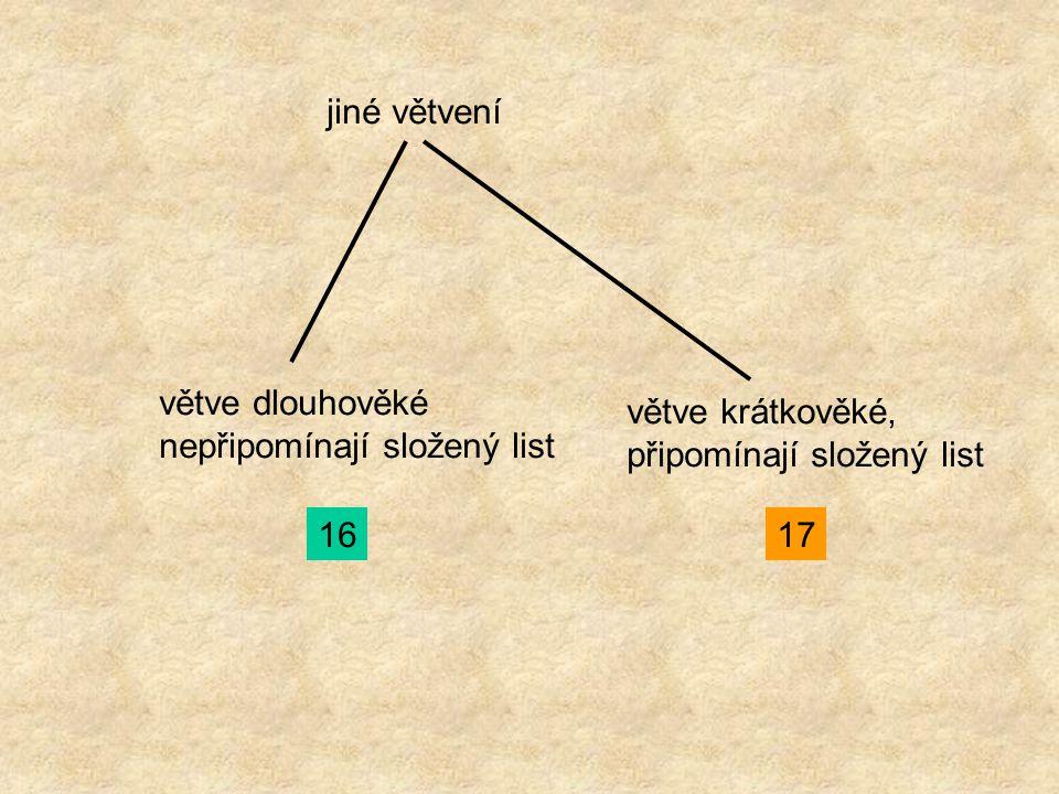jiné větvení větve dlouhověké nepřipomínají složený list 16 větve krátkověké, připomínají složený list 17