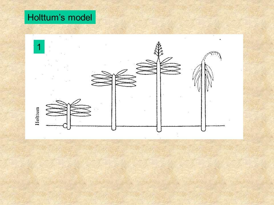 Fagerlind's model A-B - Fagraea crenulata (Loganiaceae) C - Hymenosporum flavum (Pittosporaceae) D - Magnolia grandiflora (Magnoliaceae) E - Conohoria riana (Violaceae)