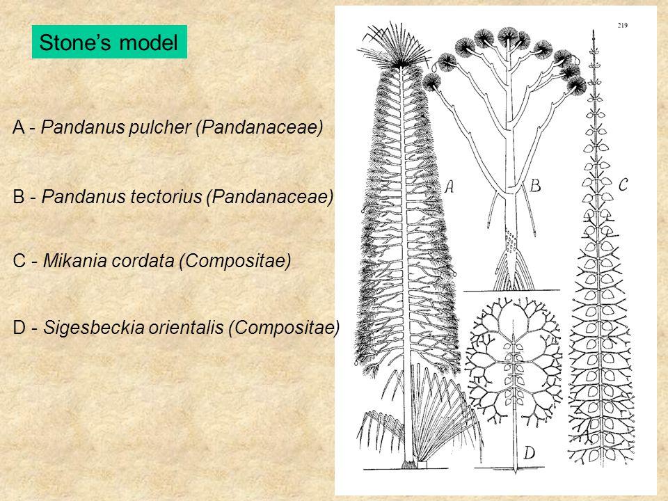Stone's model A - Pandanus pulcher (Pandanaceae) B - Pandanus tectorius (Pandanaceae) C - Mikania cordata (Compositae) D - Sigesbeckia orientalis (Com