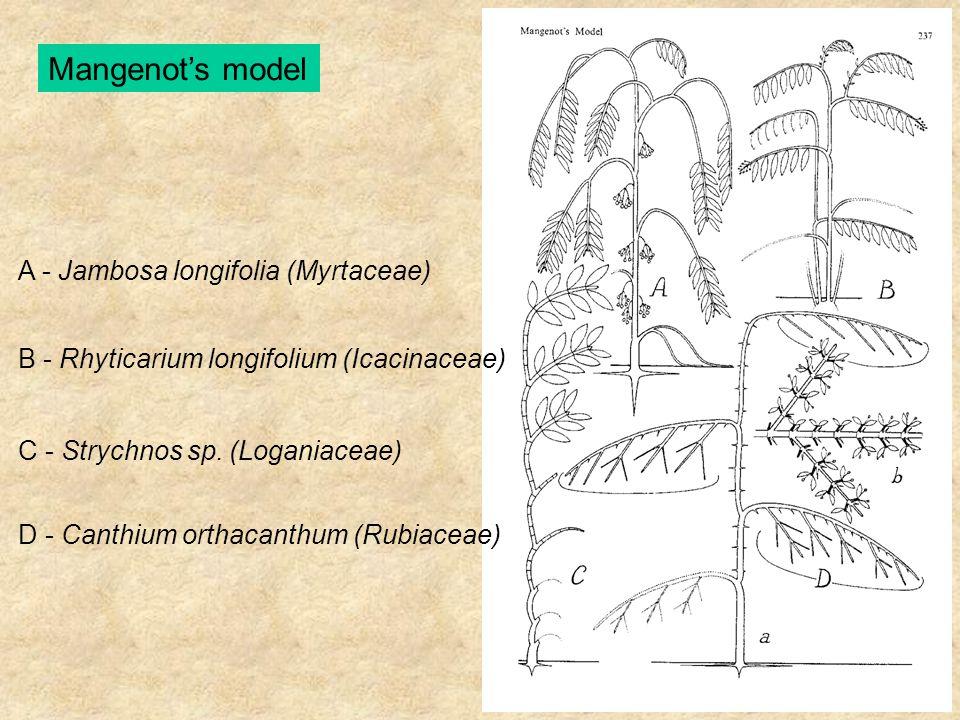 Mangenot's model A - Jambosa longifolia (Myrtaceae) B - Rhyticarium longifolium (Icacinaceae) C - Strychnos sp. (Loganiaceae) D - Canthium orthacanthu