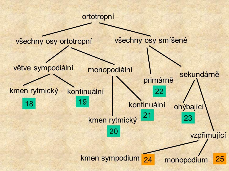 ortotropní všechny osy ortotropní všechny osy smíšené větve sympodiální monopodiální kmen rytmický 18 kontinuální 19 kmen rytmický 20 kontinuální 21 p