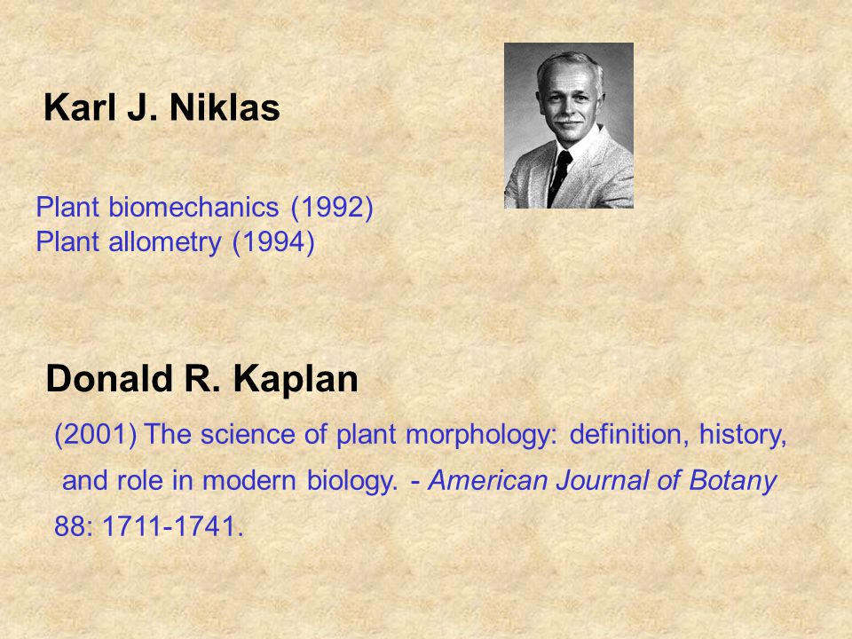 Karl J.Niklas Plant biomechanics (1992) Plant allometry (1994) Donald R.