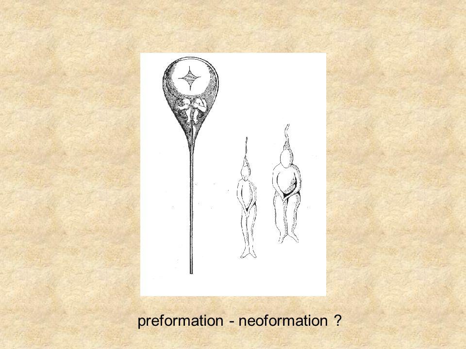 preformation - neoformation ?