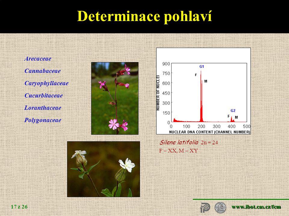 www.ibot.cas.cz/fcm 17 z 26 Determinace pohlaví Arecaceae Cannabaceae Caryophyllaceae Cucurbitaceae Loranthaceae Polygonaceae Silene latifolia 2n = 24 F – XX, M – XY