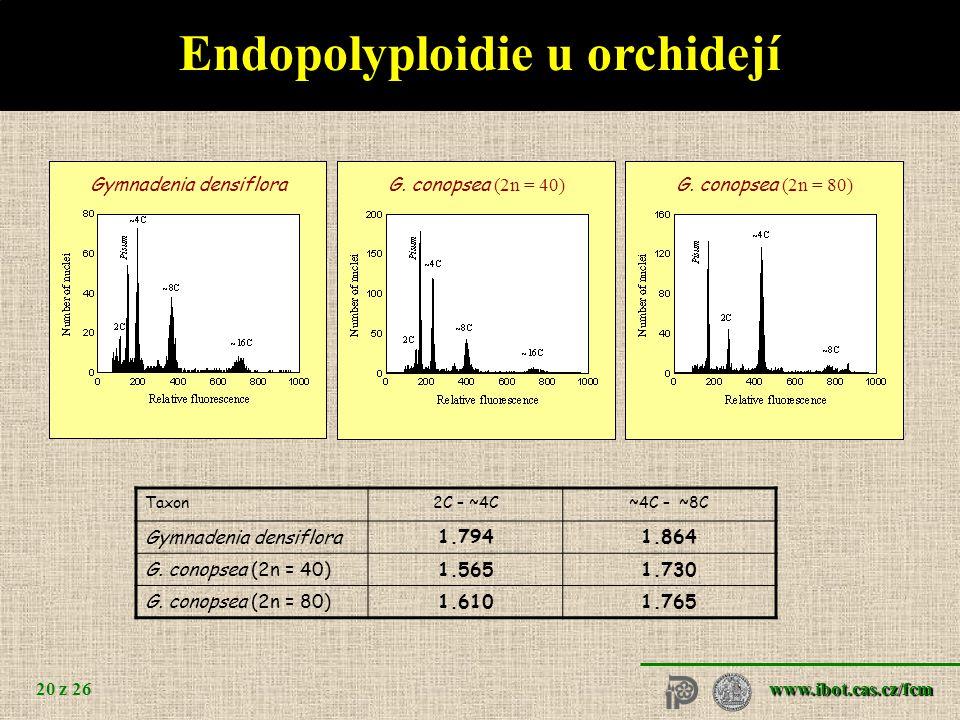 www.ibot.cas.cz/fcm 20 z 26 Endopolyploidie u orchidejí Gymnadenia densifloraG.