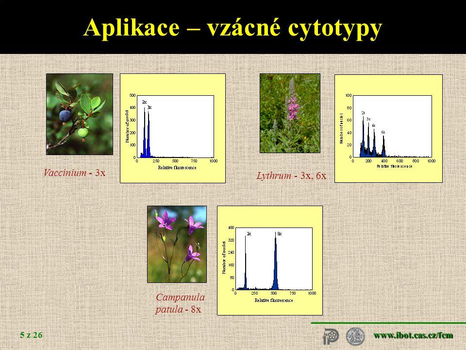 www.ibot.cas.cz/fcm 6 z 26 Aplikace – heteroploidní křížení Empetrum - 3x Oxycoccus - 5x Galeobdolon - 3x
