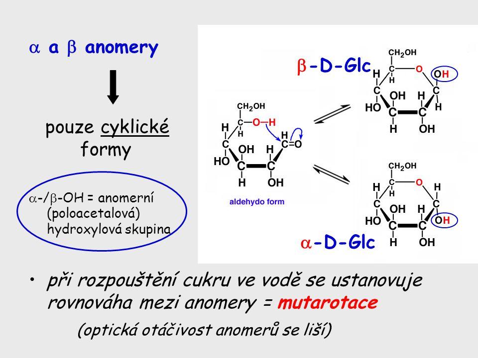 pouze cyklické formy  -/  -OH = anomerní (poloacetalová) hydroxylová skupina při rozpouštění cukru ve vodě se ustanovuje rovnováha mezi anomery = mu
