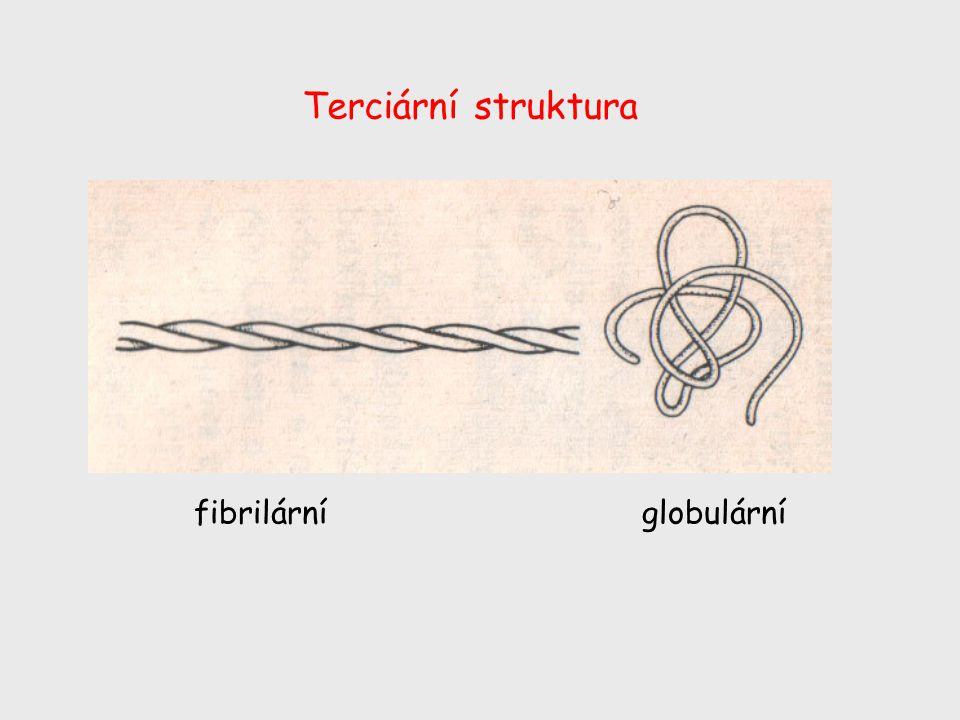 Terciární struktura fibrilárníglobulární