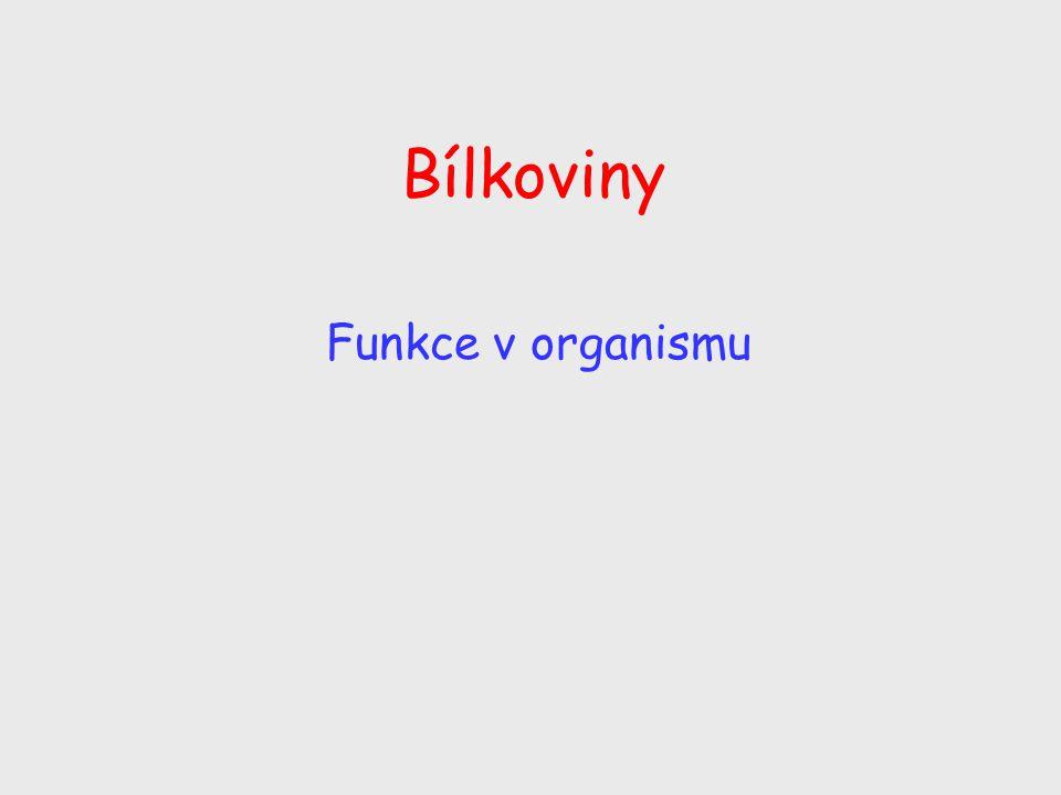 Bílkoviny Funkce v organismu