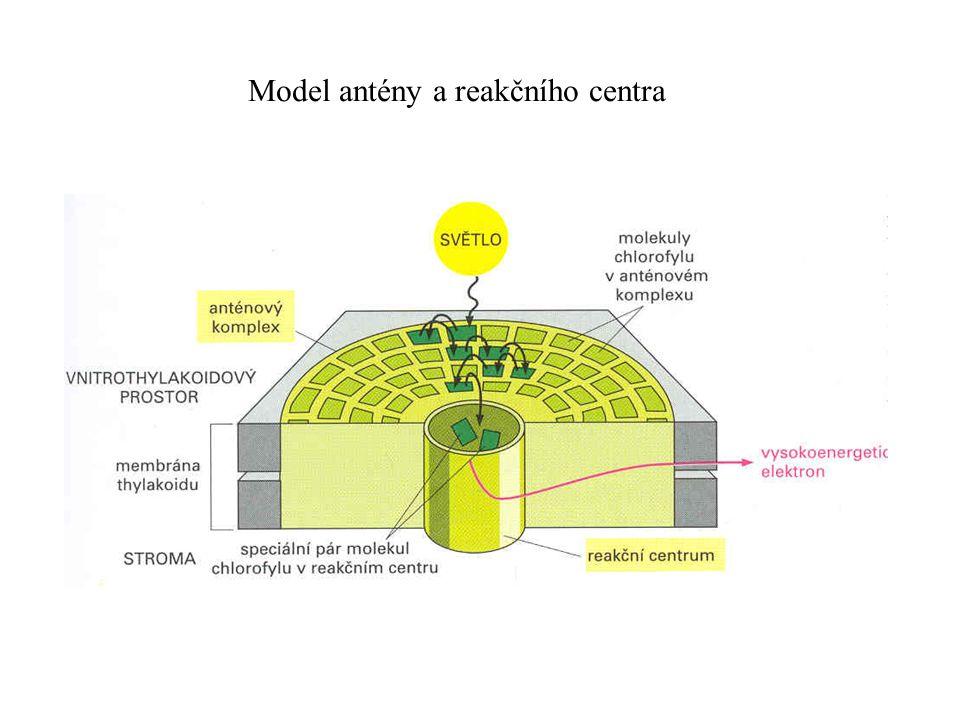 Model antény a reakčního centra