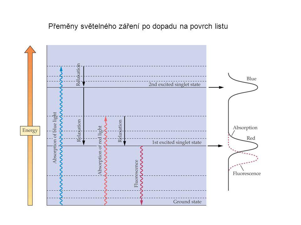 Přeměny světelného záření po dopadu na povrch listu