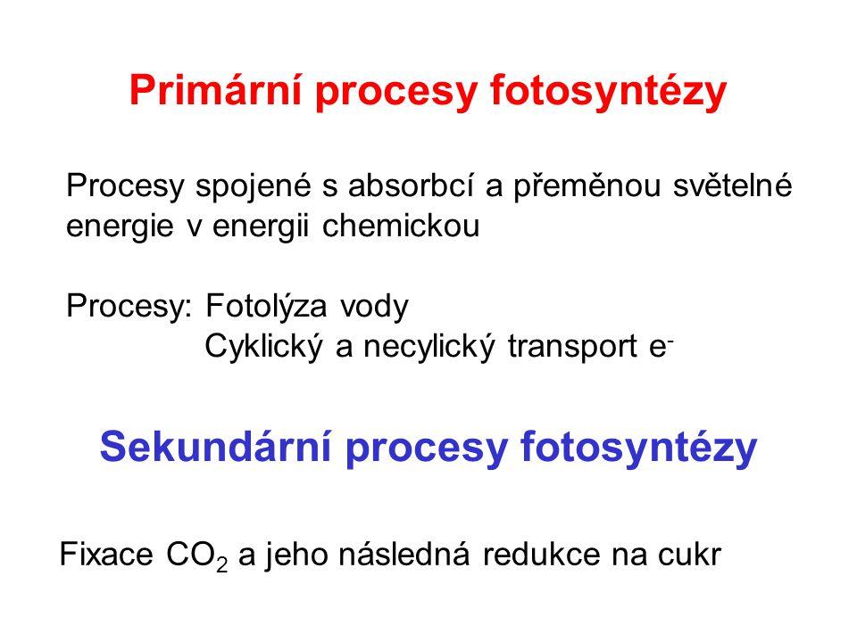 Primární procesy fotosyntézy Procesy spojené s absorbcí a přeměnou světelné energie v energii chemickou Procesy: Fotolýza vody Cyklický a necylický transport e - Sekundární procesy fotosyntézy Fixace CO 2 a jeho následná redukce na cukr